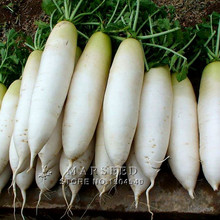 80 long white radish seeds Fruit and vegetable seeds  Non-GMO Healthy fresh diy home garden Free Shipping