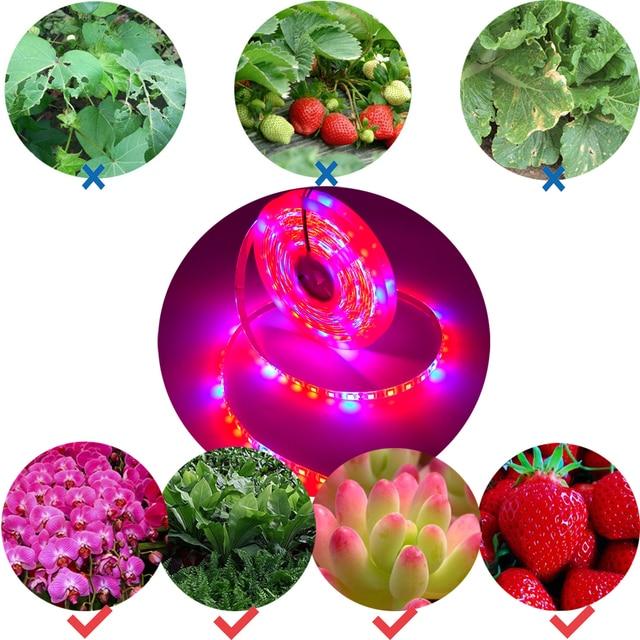 Oświetlenie roślin 5m wodoodporny pełnozakresowe LED pasek kwiat lampa fito czerwony niebieski 4:1 dla szklarni hydroponicznych + zasilacz