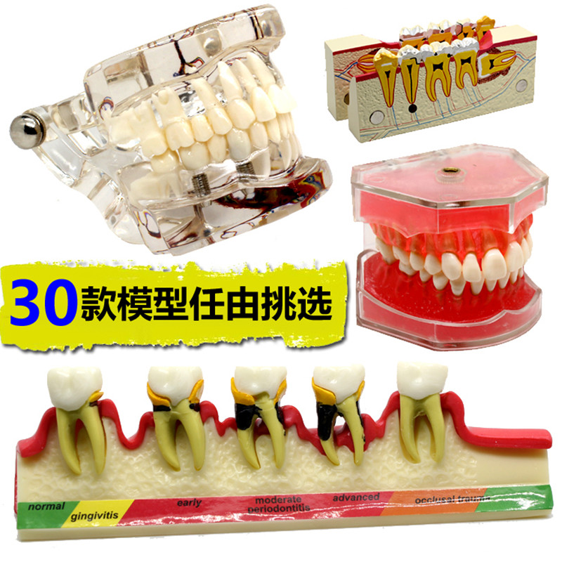 Various-Dental-Teeth-Models-Are-Used-For-Teaching-And-Hospital-Dentist-Material (2)