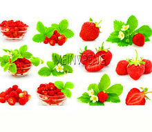 Loss Promotion!Giant Japan Strawberry bonsai, Giant Red Strawberry Organic plants Garden,300flores(China)