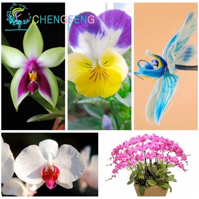 Vendita calda 100 pz orchidea phalaenopsis bonsai farfalla Rare bella fiore bonsais Plantas casa e Decorazione del giardino