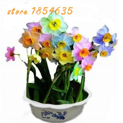200pcs/bag Flower Daffodil,rainbow Daffodil Seeds,bonsa