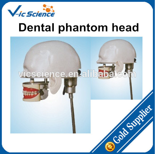 Dental phantom head,dental phantom,phantom phantom cam 0857