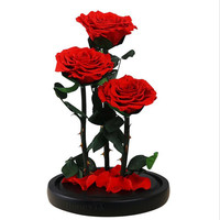 Preserved Real Rose with Fallen Petals in Glass Cloche Dome Black Wood Base