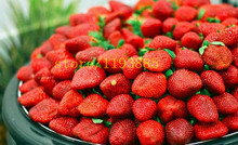500 pcs climbing strawberry seeds Climbing Red Strawberry Seeds With SALUBRIOUS TASTE * NON-GMO Strawberry Mount Everest* EDIBLE