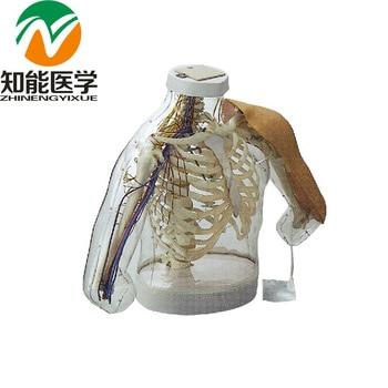 BIX-H30 Alarming System Comparison Demonstration Upper-Arm Intramuscular Injection Model W152