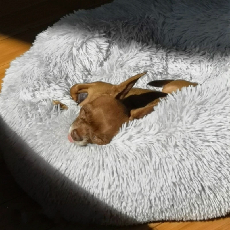 Macaron Round Dog Bed Photograp Washable Cat Small Doughnuts Dog House Super Soft Cotton Mats Sofa For Dog Chihuahua Dog Basket