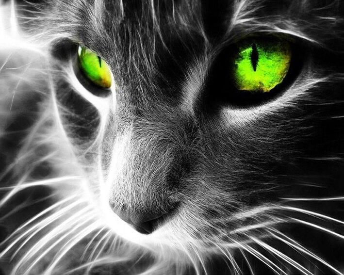Глаза кошки для вышивки