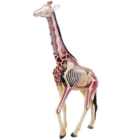 4D Master giraffe specimen internal organs bone anatomical assembly model robin hood 4d xxray master mighty jaxx jason freeny anatomy cartoon ornament