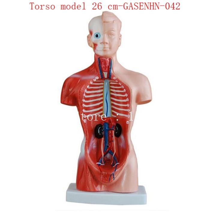 Charmant Anatomie Und Humanbiologie Ideen - Anatomie Ideen - finotti ...