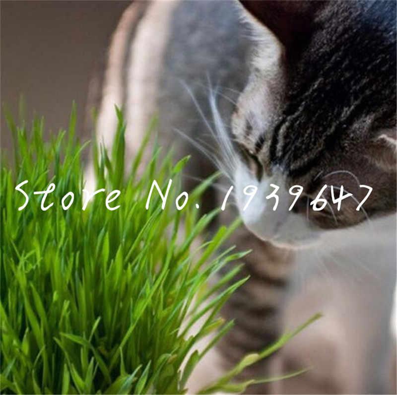 100 pcs/bag Bonsai Cat Grass wheat A kind of Cat food grass orangic grain cereals cropper plants perennial herb for home garden
