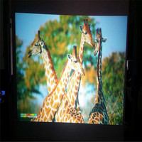 1.52x5m HD Dual Projection Film /Frant &Rear Projection Screen with competive price