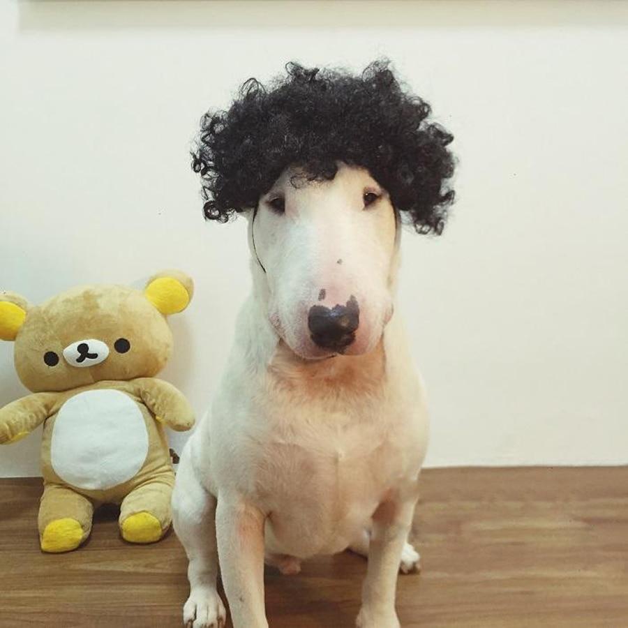 Freies Verschiffen-Explosions-Haustier-Perücke der Hundelustige Kopfbedeckungszusatzhaustier Kopfbedeckungshut Cosplay Art und Weise kleiden oben lustigen Hut des Haustieres an