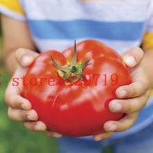 200 шт. большой говядины гибридный семена помидоров гигантский томата-фрукты и семена плодов для дома сад бесплатно без гмо купить-пу прямая — от — китай