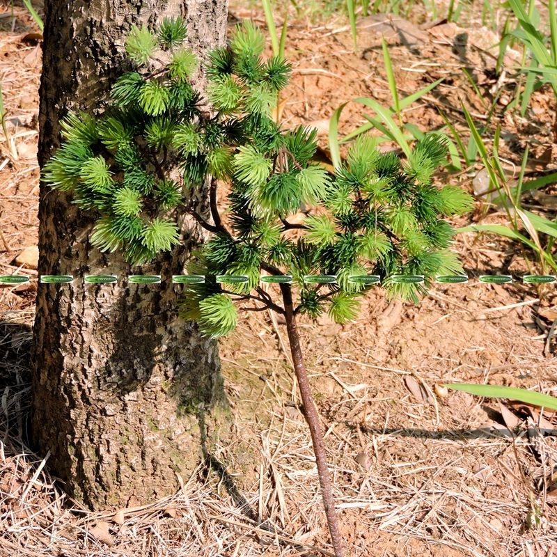 42cm plastic artificial pine evergreen plant tree branch