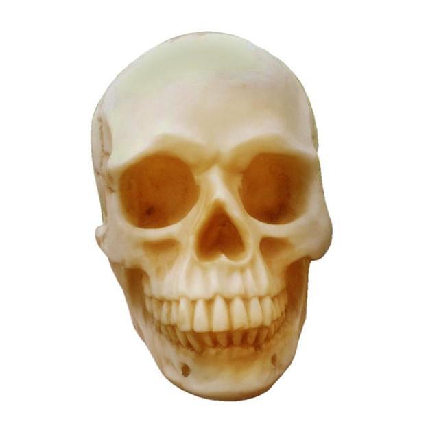 Human Skull Resin Replica Medical Model Lifesize Halloween Home Decoration  High Quality Decorative Craft Skull