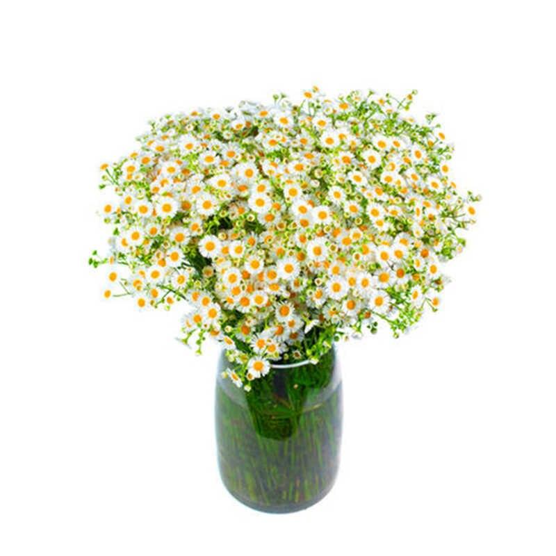 100 Pcs/Tas, Afrika Biru Bermata Daisy Flores Osteospermum Plantas Bonsai Bunga Plante, Alam Pot Tanaman untuk Taman Rumah