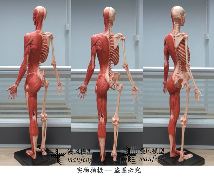 1/box) pu material 60cm the standard model of the female human ...