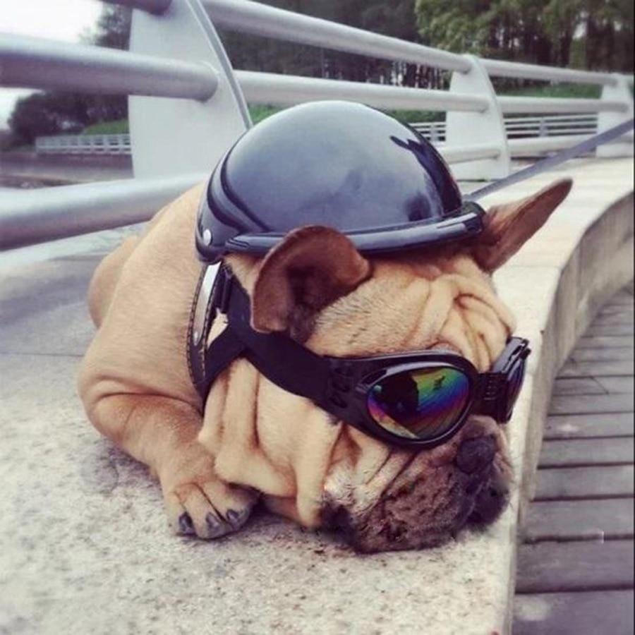 Envío gratis Perro Motocicleta casco Casco de seguridad para mascotas Casco fresco Sombrero del perro Ornamentos divertidos para mascotas Gafas de sol GRATIS Motociclistas