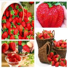 Discount! 200pcs Giant Strawberry Bonsai Super Big Red Strawberry Fruit Bonsai Delicious Bonsai Plant Gift Garden Free Shipping(China)
