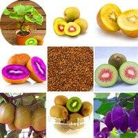 Fresh Kiwi Seeds 100 Real Actinidia Chinensis Seeds Delicious Organic High Nutritional Value Bonsai Home Garden