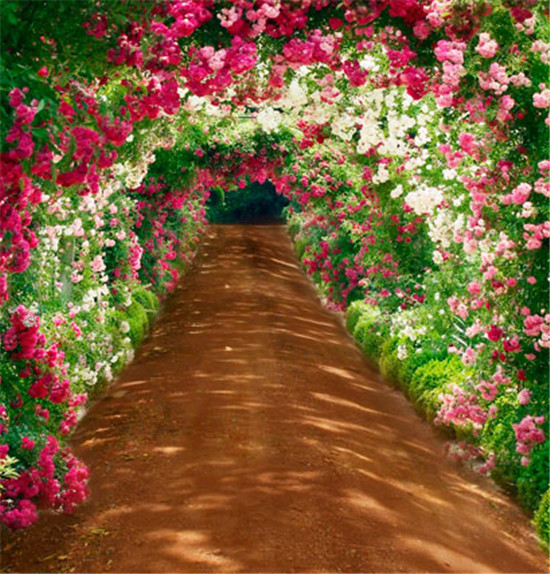 10x10FT Color Flowers Tunnel Gate Sunlight Path Spring