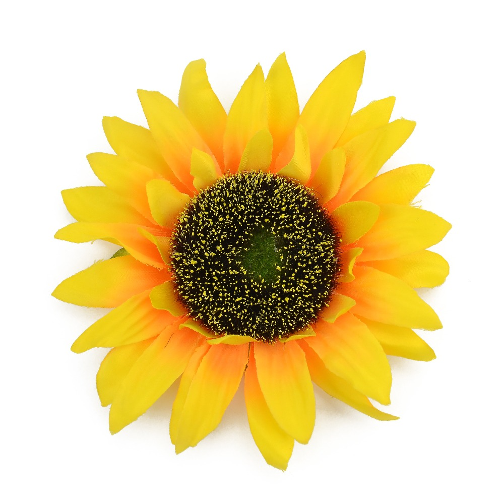 Sunflower pictures, Free Sunflower photos