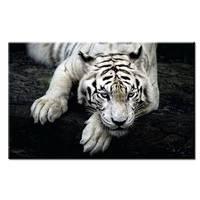 Verbazingwekkende Witte Tijger Muur Schilderij Canvas Voor Thuis Decor Olieverf Arts Geen Ingelijst Muur Foto Canvas 12X18 16X24