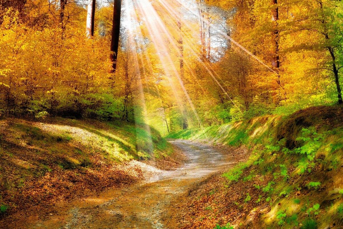Bildergebnis für свет золотой лес