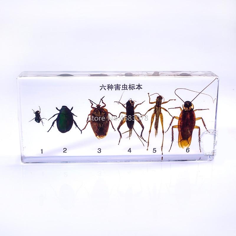 Brand New 6 tipi pregiudizievole insetto campioni In chiaro Lucite Educativi Esplorare Strumento di 14X6.4X2 cmBrand New 6 tipi pregiudizievole insetto campioni In chiaro Lucite Educativi Esplorare Strumento di 14X6.4X2 cm