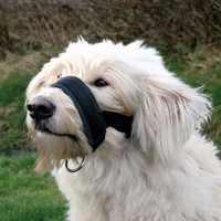 Haustier Hund Gepolsterte Kopf Kragen Sanfte Halter Leine Führer Stoppen Ziehen Training Tool