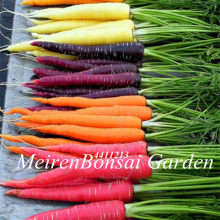 200 pcs Carrot vegetable fruit vegetable bonsai 9 colours to choose sweet and health bonsai plant for home & garden plants(China)