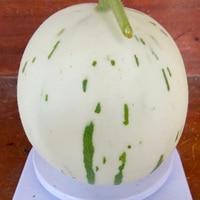 New 1 package 10 Pcs Japan White Meteor melon seeds Superior orange flesh muskmelon seeds High sugar brix fruit seeds