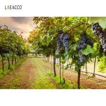 Laeacco Photo Backdrops Manor Rural Farm Purple Grape Green Grass Scenic Photography Backgrounds Photocall Studio