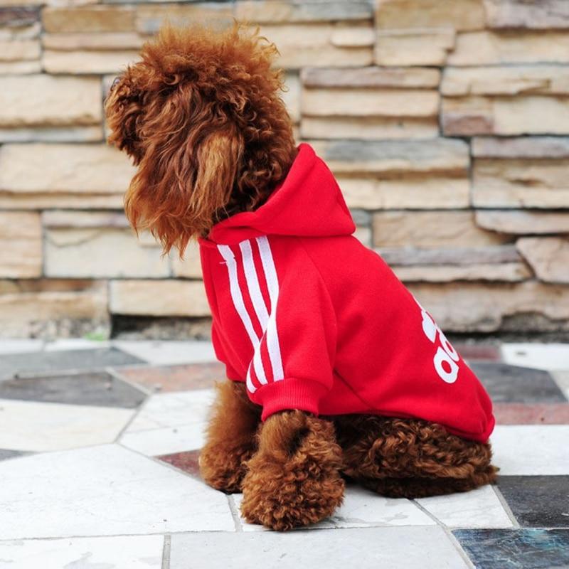sweat adidas pour chien