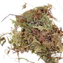 10 г сфагнум мох увлажняющее питание органическое удобрение для фаленопсиса орхидеи мусго сфагнум мох Садовые принадлежности