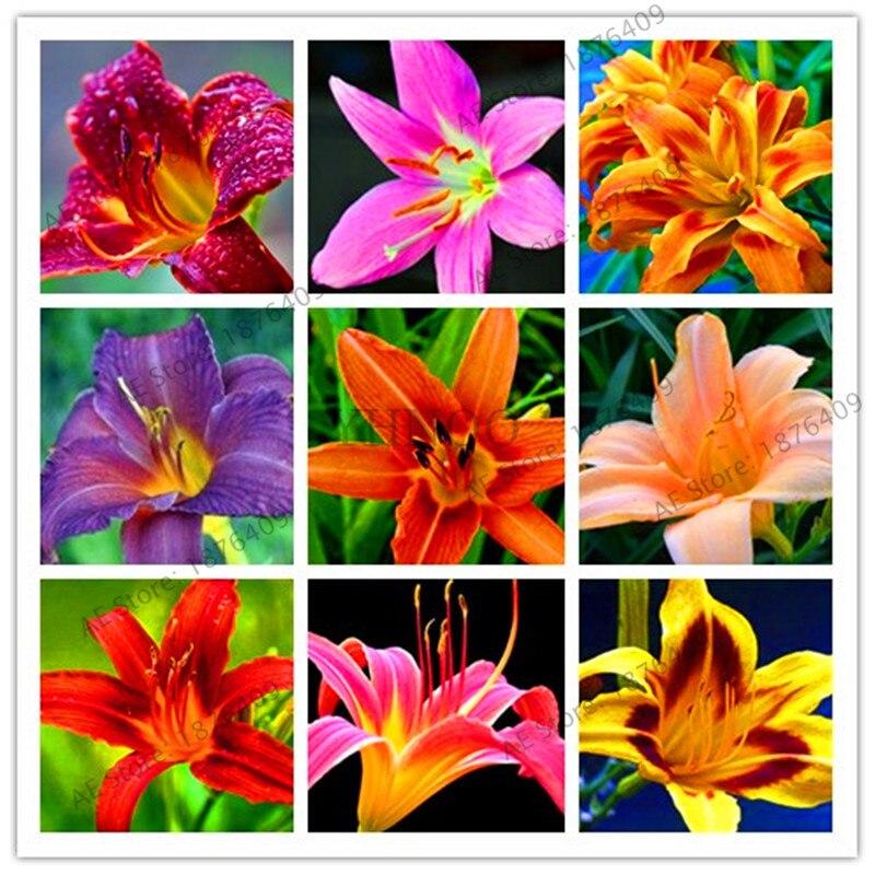 100 Pcs/pack, Schöne Tag Lilie Blume Plantas, Mehrjährige Hemerocallis Blume, Kann Verwendet Werden Als Gemüse, Bonsai Anlage Für Gard