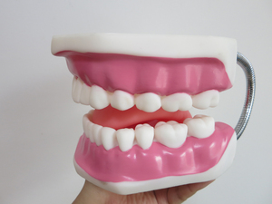 Image 5 - באיכות גבוהה 6 פעמים גדול שיניים דגם שיניים דגם מיוחד קישוט רופא שיניים מרפאת אישית דקורטיבי צלמיות