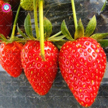300pcs Red Strawberry Seeds Super Sweet Fruit Seeds Natural Organic Herb Bonsai Plants for Home Garden Fast delivery