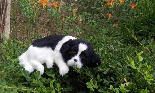 new simulation black&white dog polyethylene & furs sleeping dog doll gift about 36x9cm 257 mad about organics all natural dog
