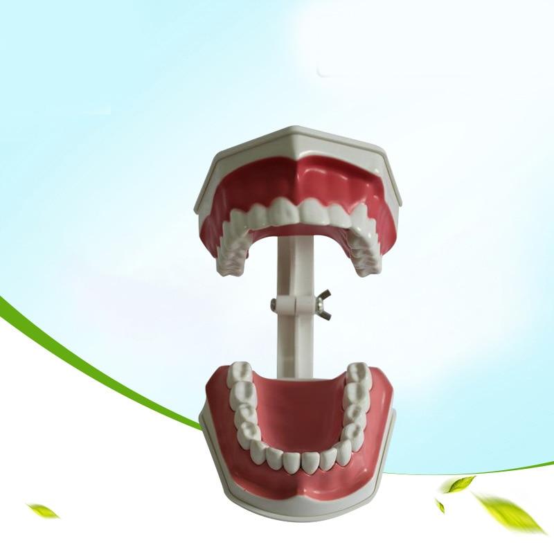 Dental materials and supplies dental teaching model equipment Children 's Oral cavity teaching soarday dental endodontic restoration model teaching communication model pathological display dental caries