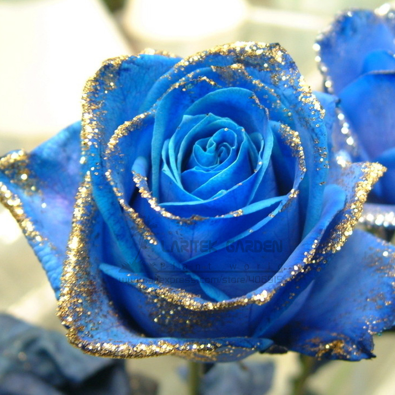 Online buy wholesale natural blue rose from china natural for Buy black and blue roses