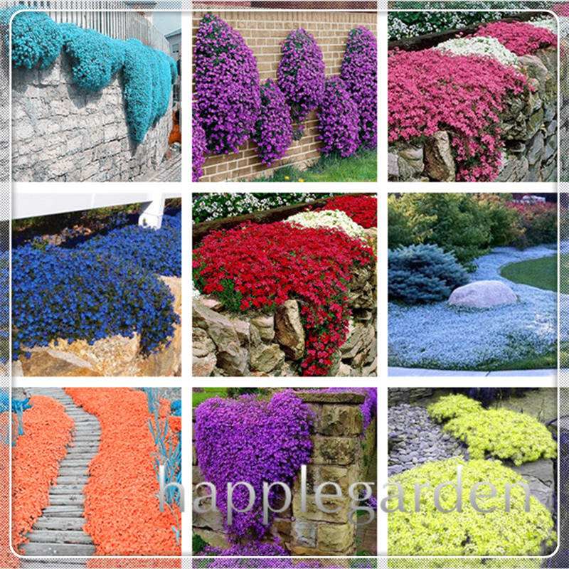Big sale 100 pcs rare ROCK cress bonsai Climbing plant Creeping Thyme flores Perennial Ground cover flower for home garden