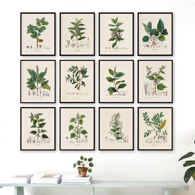 Canvas Painting Decor Pictures Vintage Posters Botanical Wall-Art Prints French-Plant-Illustrations title=