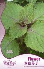 35 шт./пакет Двойной цвет Перилла Семена, оригинальной Упаковке Супер Легкий Расти Специи Семена Risped Общие Перилла