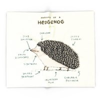 Blanket Custom Anatomy Of A Hedgehog Fleece Blanket Sofa/Bed/Plane Travel Plaids Bedding Towel