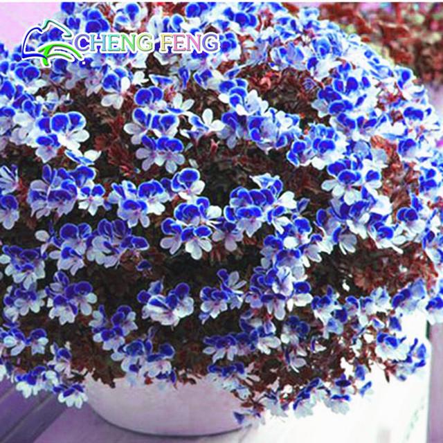 Sale!20 PCS/Pack Crimson Flower Petals Geranium bonsai, Perennial Flower plants Pelargonium Peltatum Flowers free shipping
