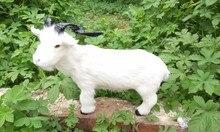 simulation white sheep model 35x28cm ,polyethylene & furs large goat toy model decoration gift t449