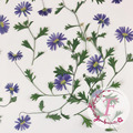 60pcs Pressed Dried Blue Daisy With Stalk Plant Herbarium For Jewelry Postcard Invitation Card Phone Case Bookmark Candle Art