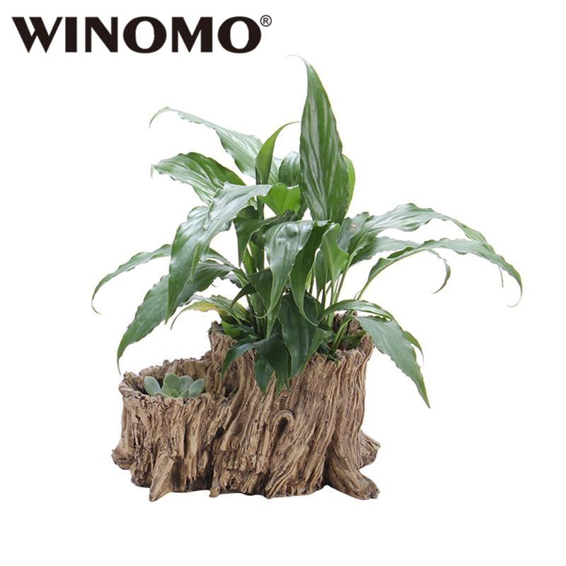 Winomo Diy Symulacja Korzeń Drzewa Soczyste Roślin